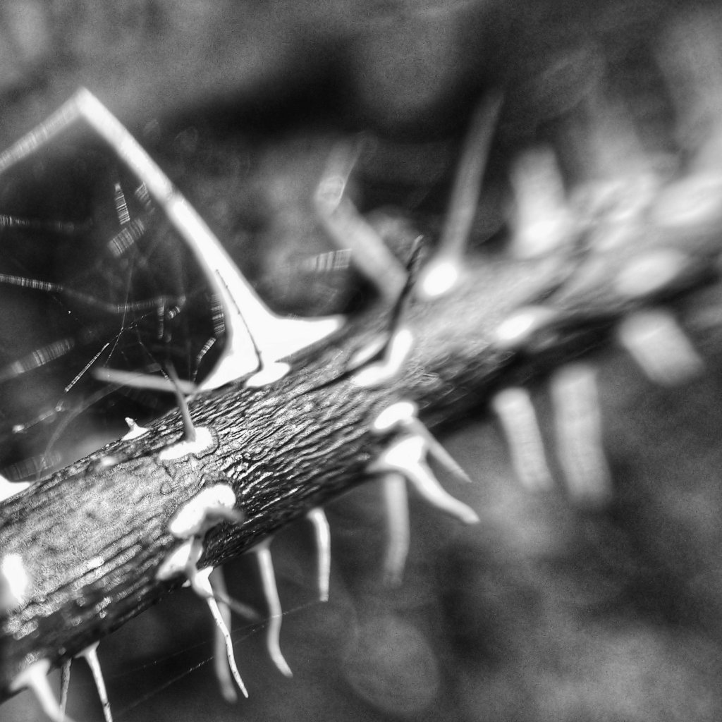 A thorny branch