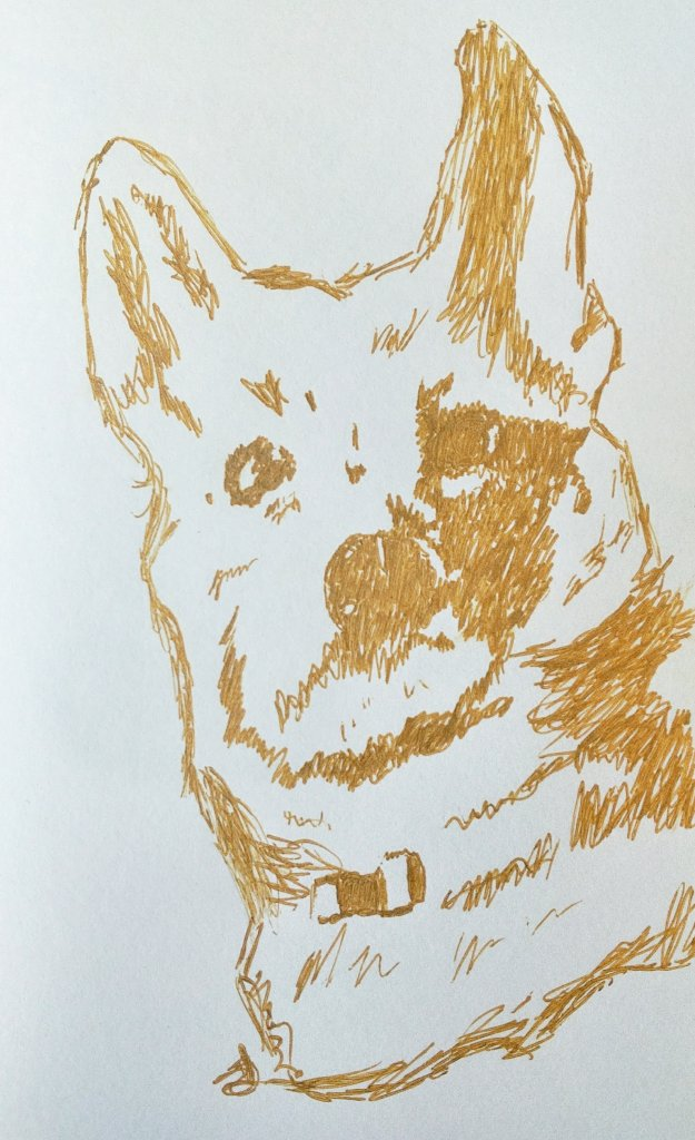 A sketch of my dog Coco
